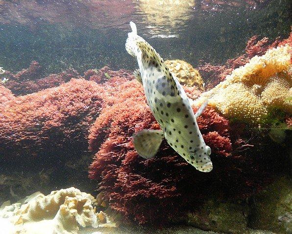 aquariumstecatherine011.jpg
