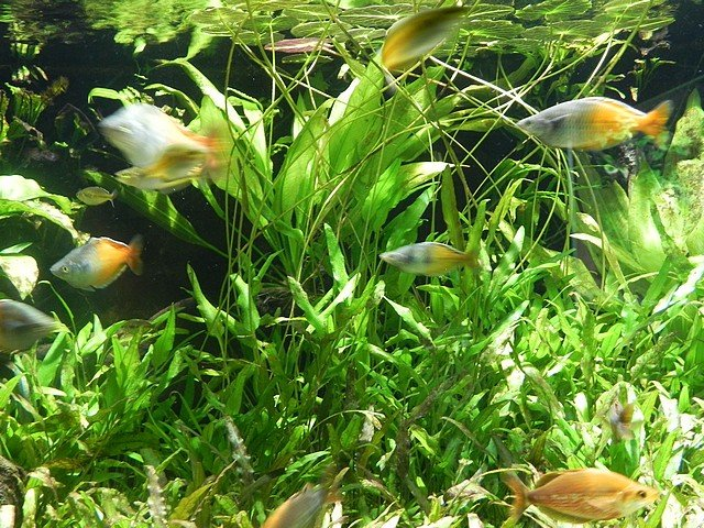 aquariumstecatherine013.jpg