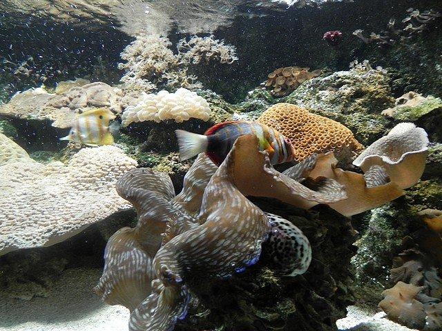 aquariumstecatherine015.jpg