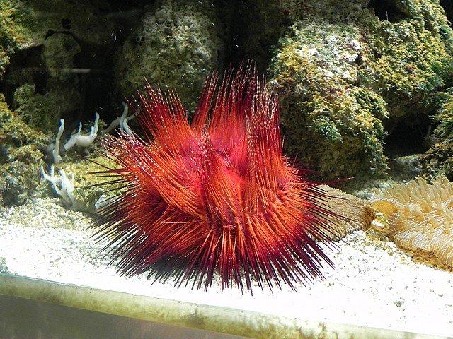 aquariumstecatherine016.jpg
