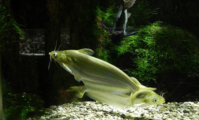 aquariumstecatherine017.jpg