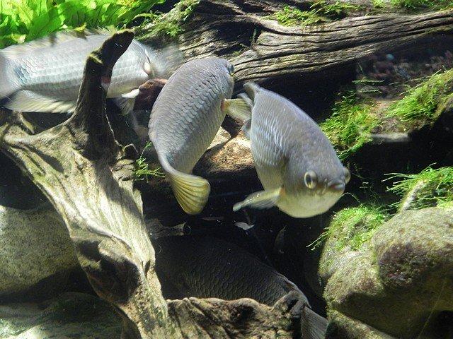 aquariumstecatherine028.jpg