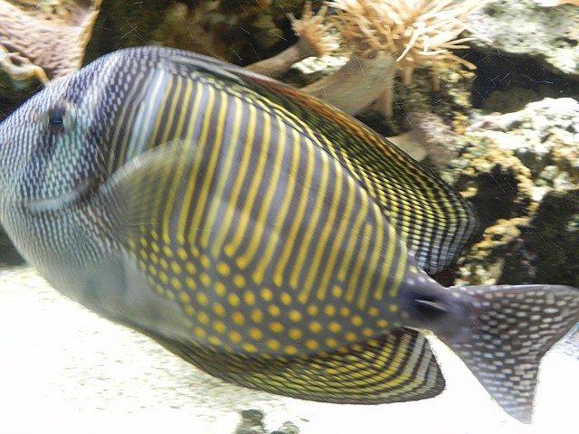 aquariumstecatherine030.jpg