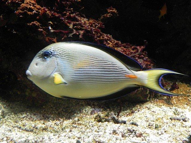 aquariumstecatherine033.jpg