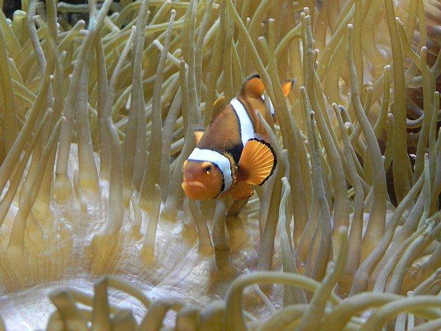 aquariumstecatherine034.jpg