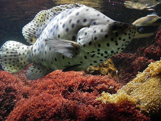 aquariumstecatherine035.jpg