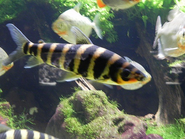aquariumstecatherine036.jpg