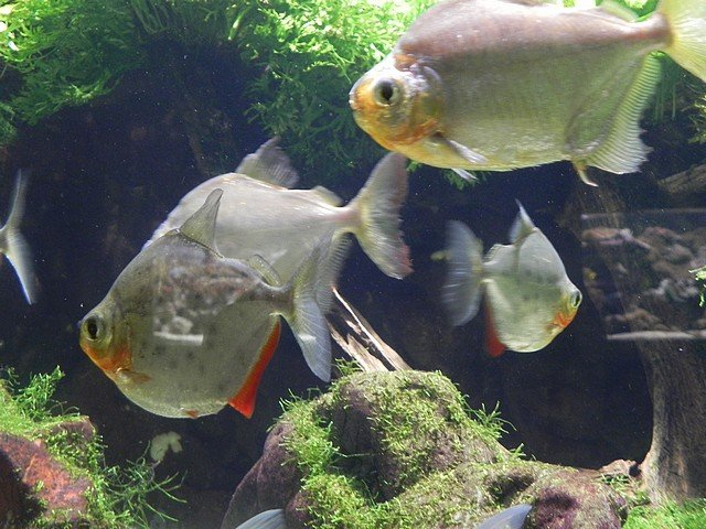 aquariumstecatherine037.jpg