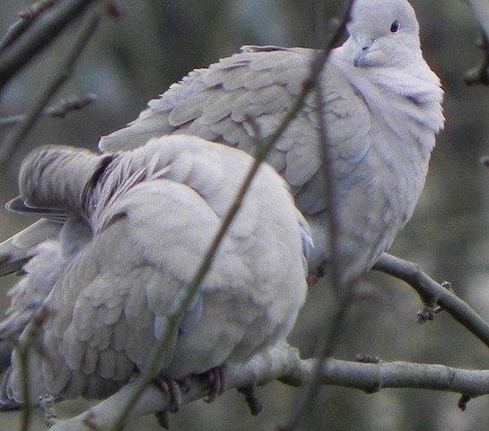 oiseaux0074.jpg