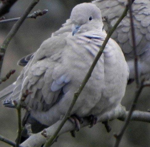 oiseaux008.jpg
