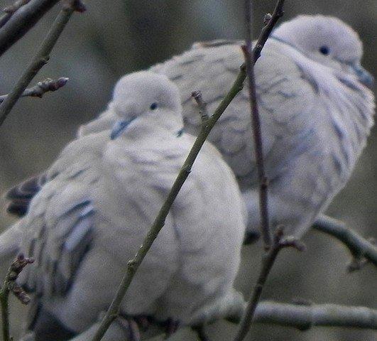 oiseaux0102.jpg
