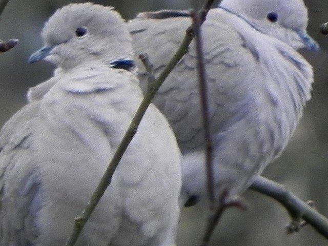oiseaux016.jpg