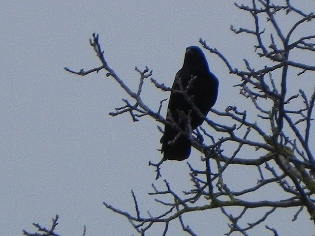oiseaux002.jpg