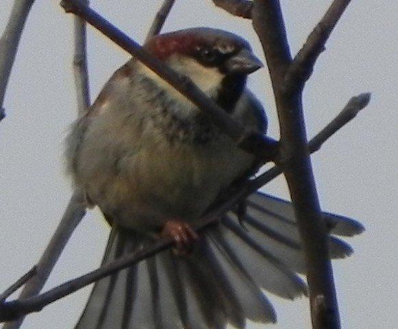 oiseaux027.jpg