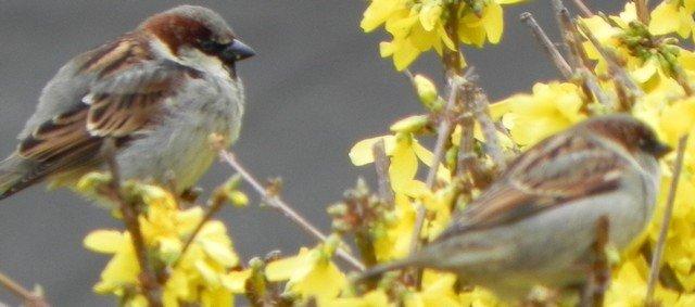 oiseaux0012.jpg