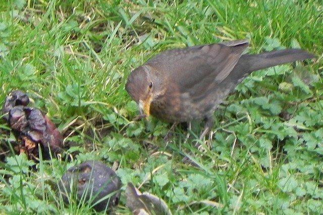 oiseaux005.jpg
