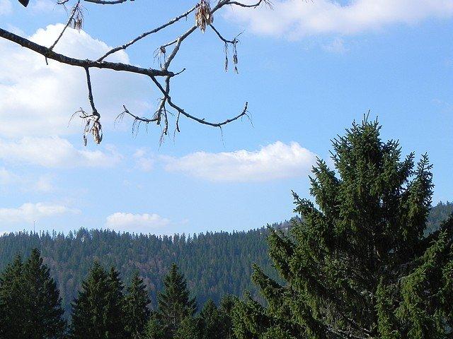 foretnoire2011058.jpg