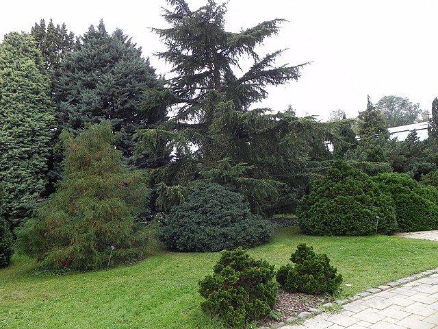 jardinbotaniquedumontet001.jpg