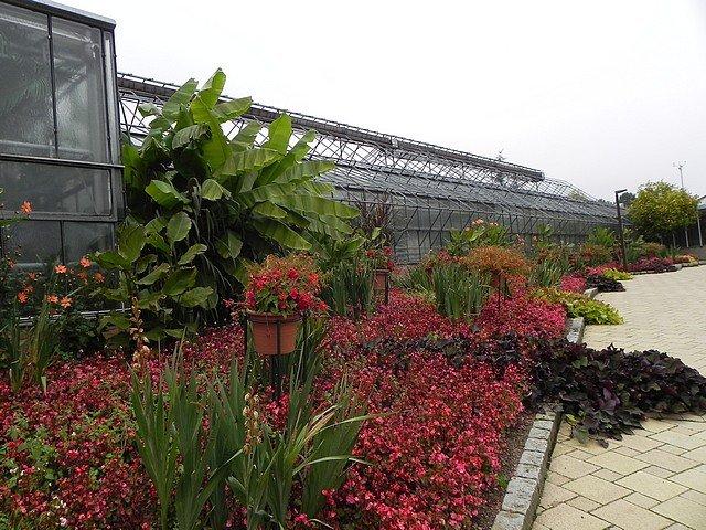 jardinbotaniquedumontet002.jpg