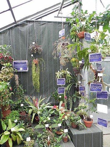 jardinbotaniquedumontet007.jpg