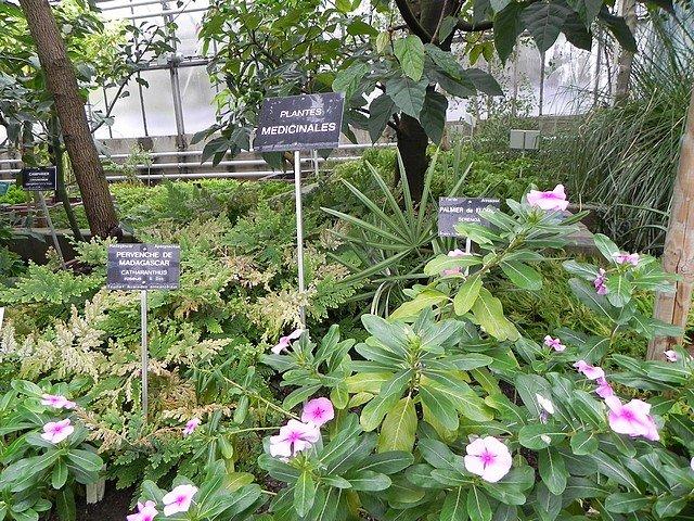 jardinbotaniquedumontet008.jpg