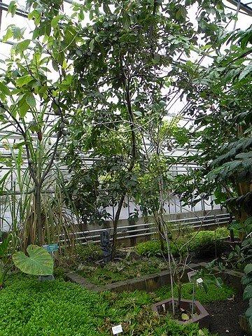jardinbotaniquedumontet009.jpg