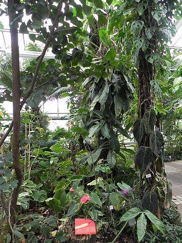 jardinbotaniquedumontet012.jpg