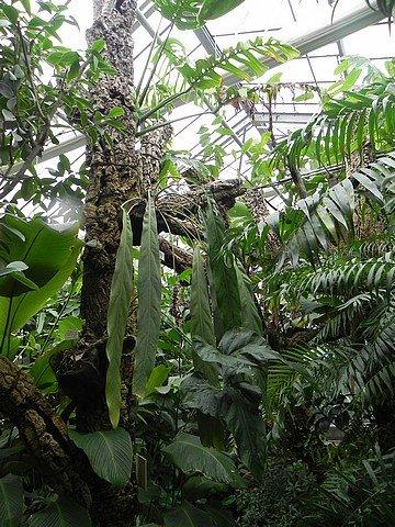 jardinbotaniquedumontet014.jpg