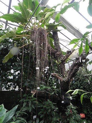 jardinbotaniquedumontet016.jpg