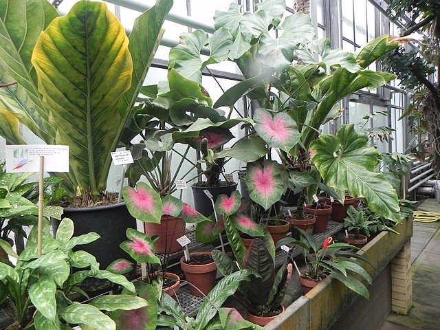 jardinbotaniquedumontet018.jpg