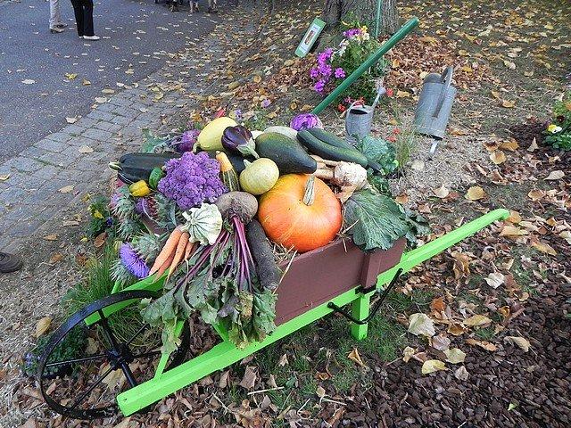jardinextraordinaire061.jpg