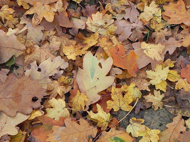 automne2011003.jpg