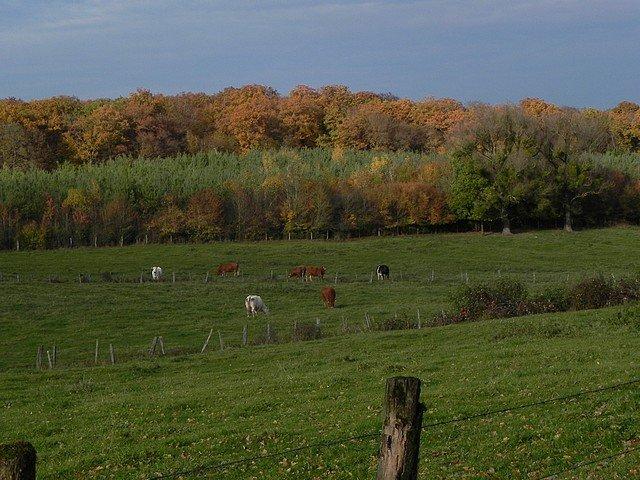 automne2011016.jpg
