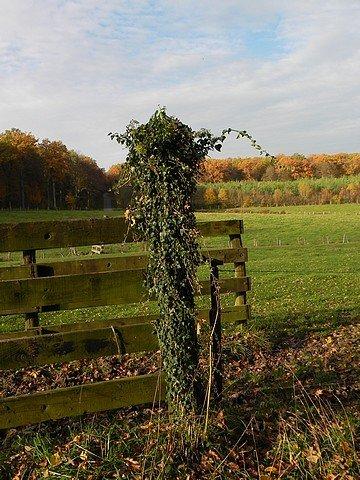 automne2011020.jpg