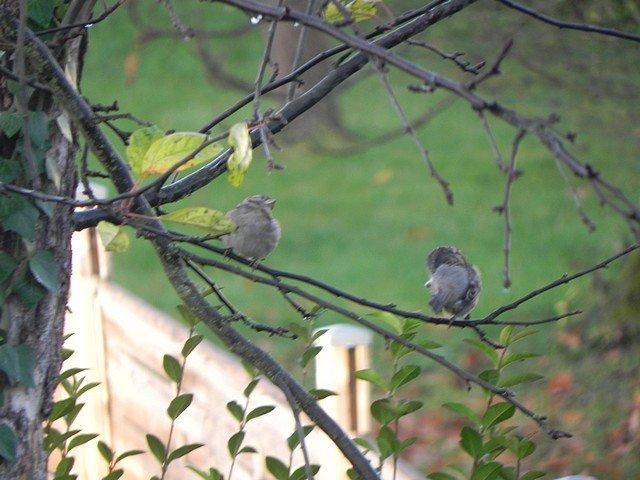 oiseaux001.jpg