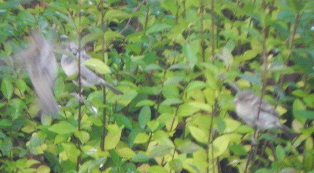 oiseaux006.jpg
