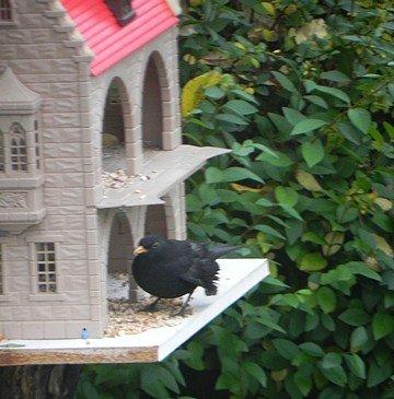oiseaux013.jpg