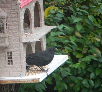 oiseaux017.jpg