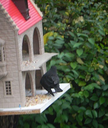 oiseaux019.jpg