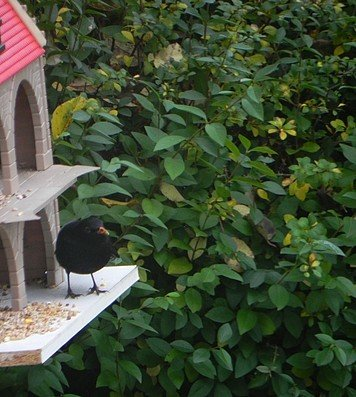 oiseaux021.jpg