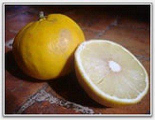 bergamotefruit.jpg