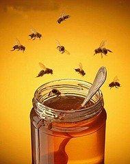 LE MIEL dans LE SAVIEZ-VOUS ? miel