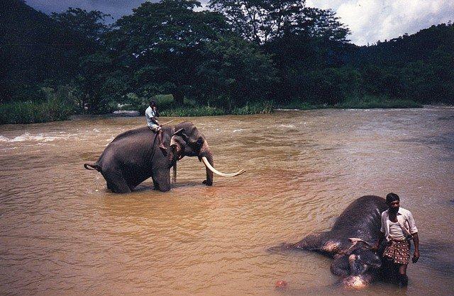 TOILETTE DES ELEPHANTS dans VOYAGES img207