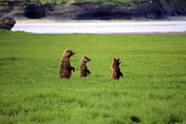 OURS AU NATUREL dans INSOLITE ours