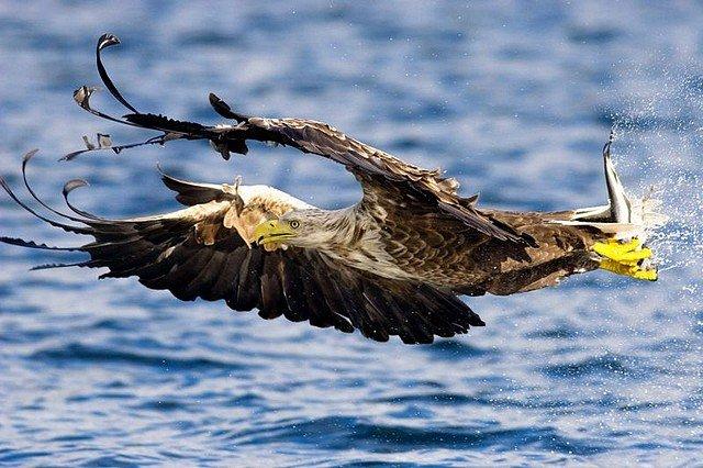 OISEAU DE PROIE dans INSOLITE oiseaudeproie