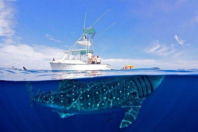 DOUX GEANT dans INSOLITE requin