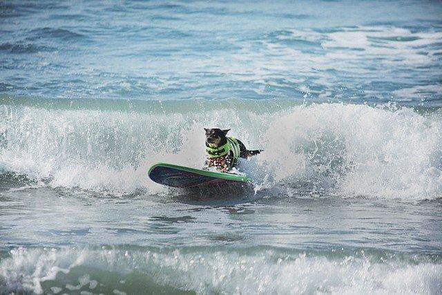 LE BEACH DOG dans INSOLITE dog