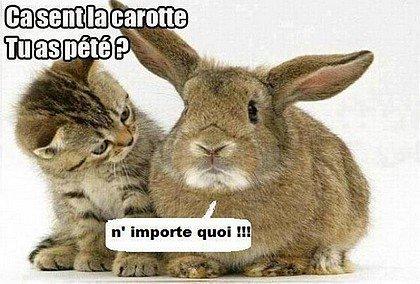 MARRANT ! humour11