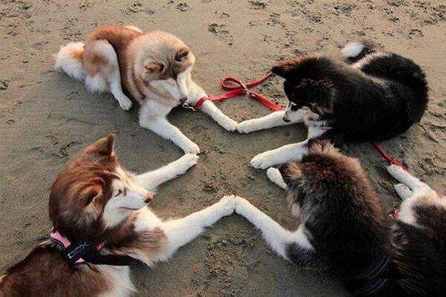 convivialite canine